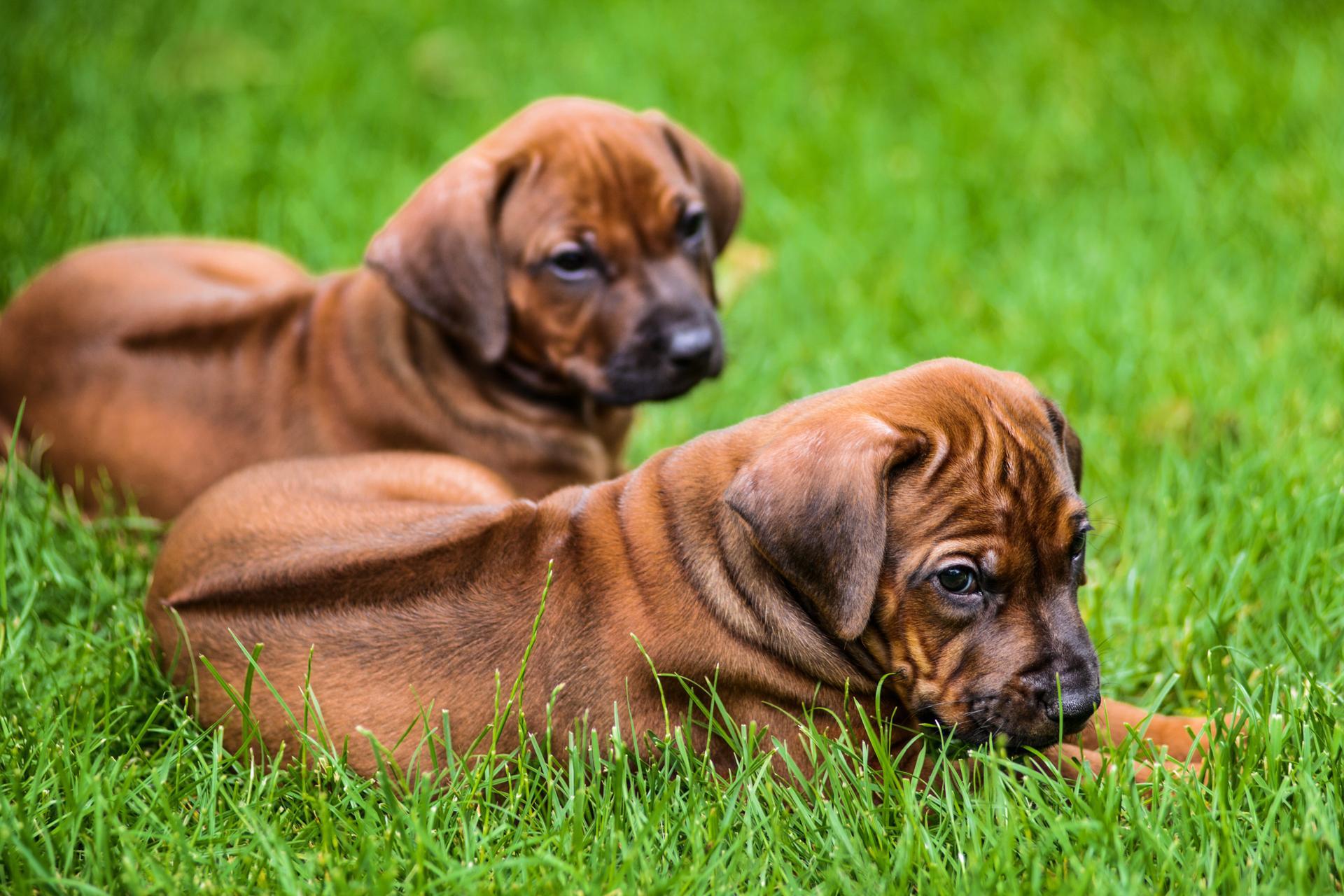 Puppygroep
