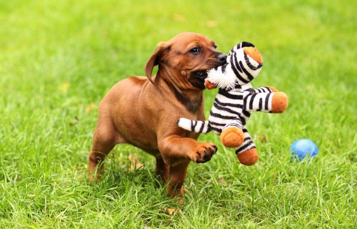 Puppy spam!