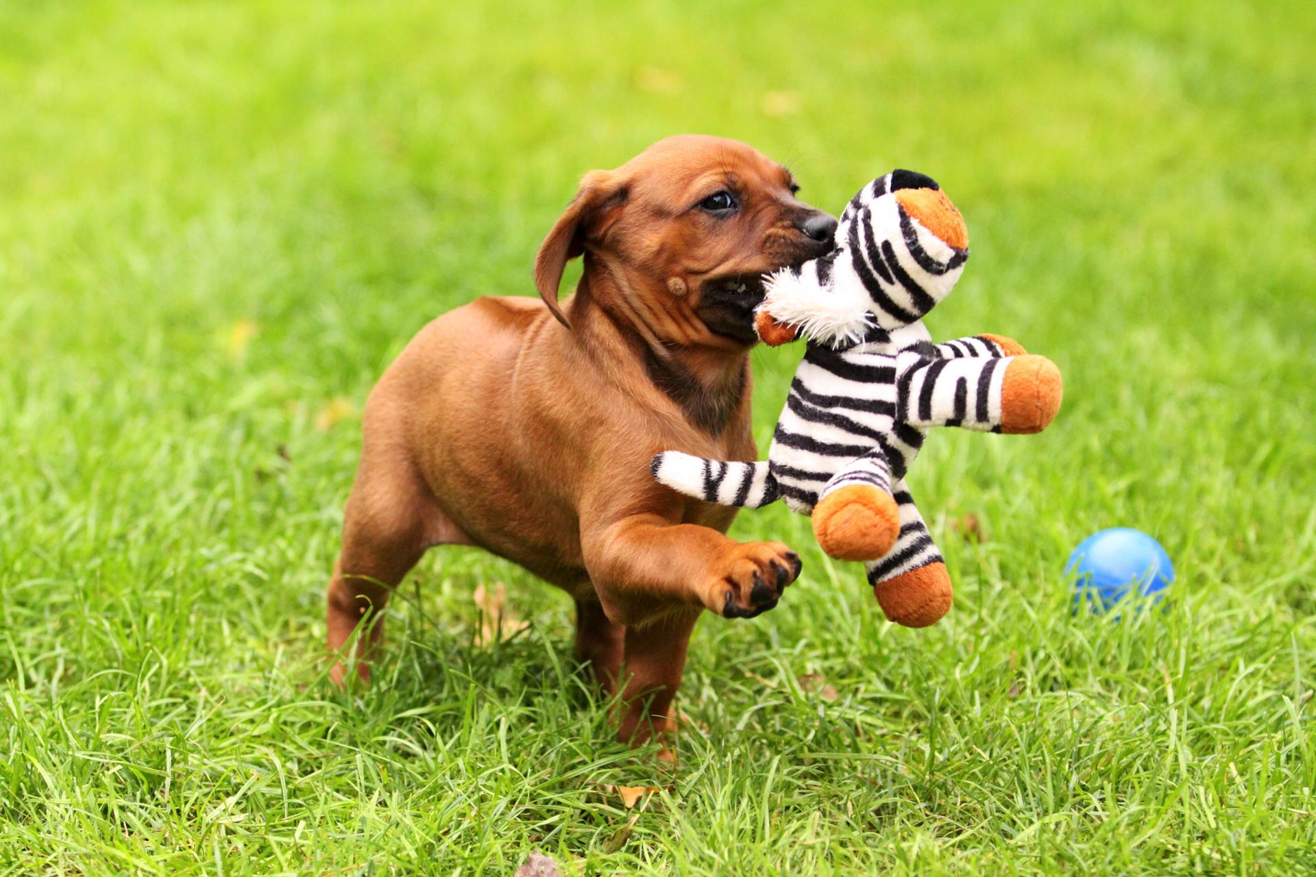 puppy spam