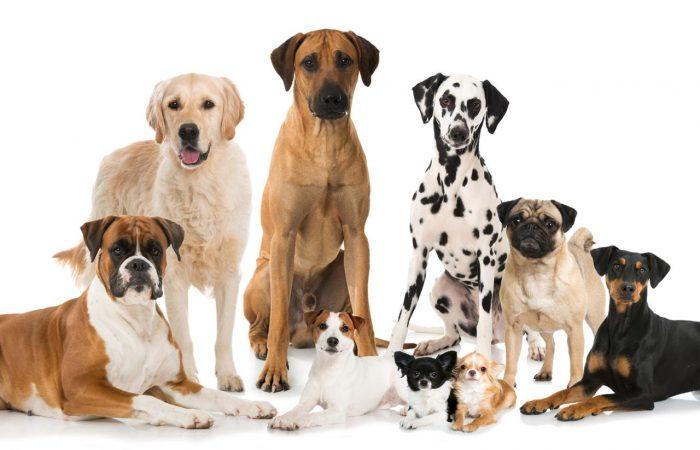 Spelen met andere honden