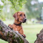 Dagje uit met je hond in de lente