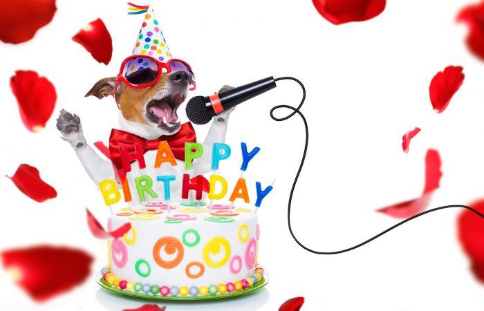5 leuke ideeën voor de verjaardag van jouw hond