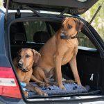 hond mee in de auto