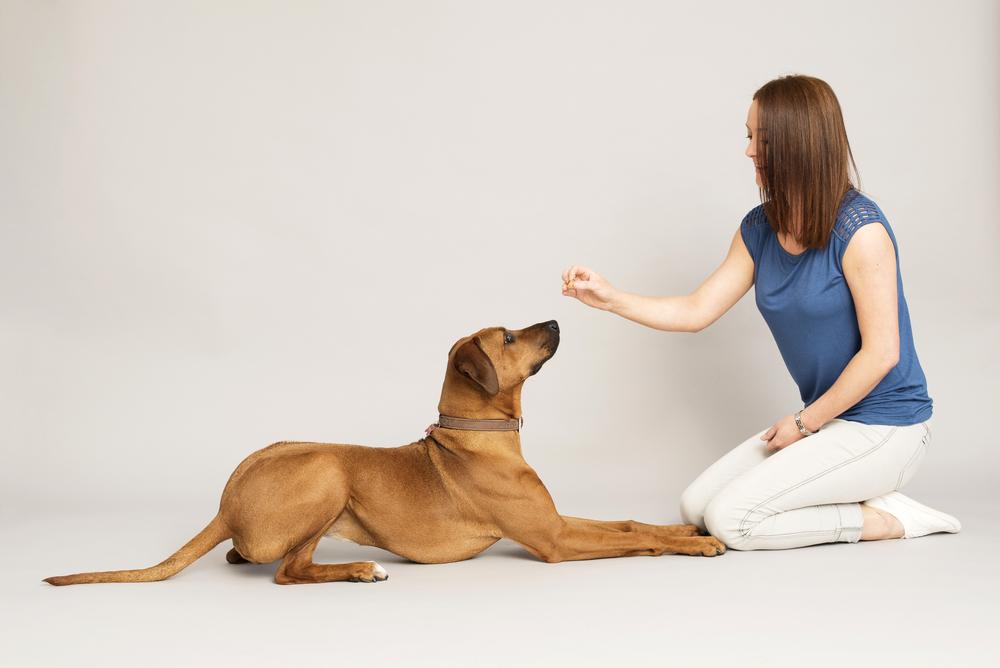 Cursussen voor jonge honden