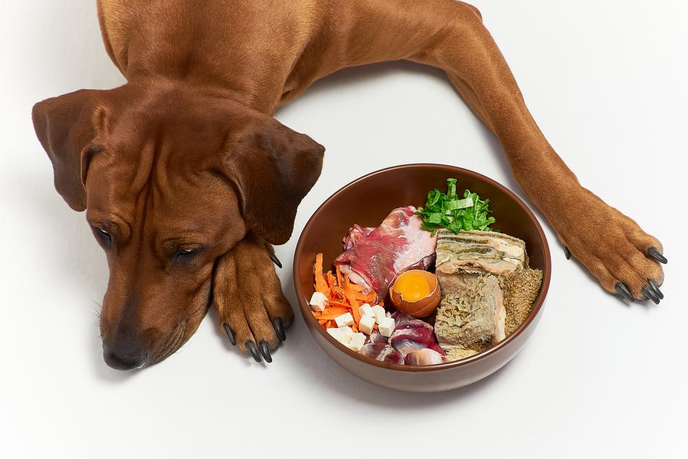 Hondenvoedsel met veel allergenen