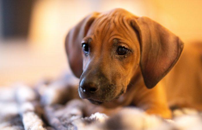 Puppy alleen laten